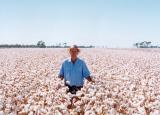 新南威尔士州棉花农场百年来首次收获