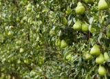 维多利亚州前5名成熟采摘的水果农场