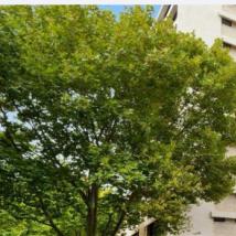 开发商为整个PottsPoint公寓楼提供8500万美元